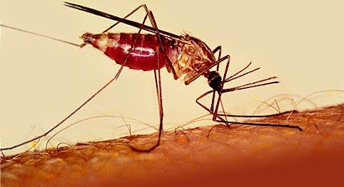 There is no vaccine for malaria, it can only be treated through preventative medication.