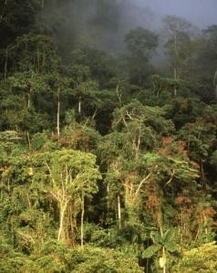 Who will Really Benefit from the Conservation of our Tropical Rainforests?