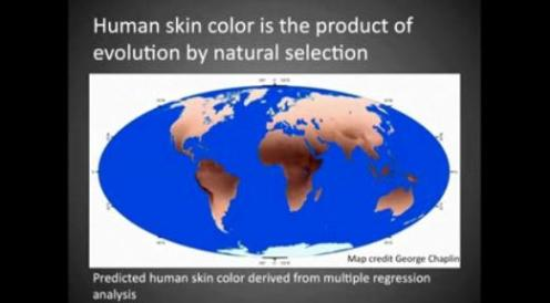 Predicted human skin colour of the world